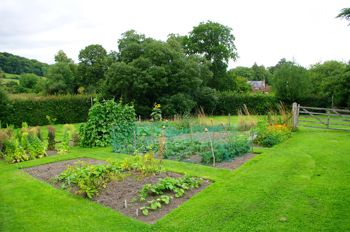 vegetable-garden1