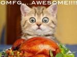 Thanksgiving Funny Cat
