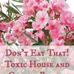 Don't Eat That! Toxic House and Garden Plants