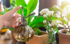 3 Easy Steps to Create an Awesome Indoor Garden